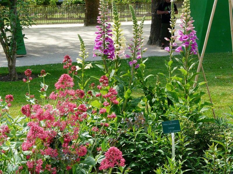 Jardin des plantes fleurs for Plantes fleuries jardin