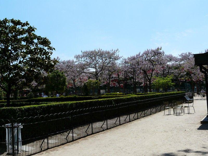 Jardin du luxembourg arbres en fleurs for Arbres jardin du luxembourg